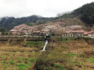 2015-04-01 宗林寺